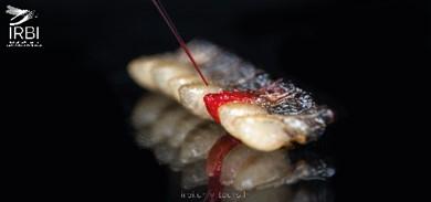 Injection dans les pupes de la guêpe parasitoïde Nasonia vitripennis © E. Sansault/ANEPE Caudalis/IRBI –CNRS/Université de Tours